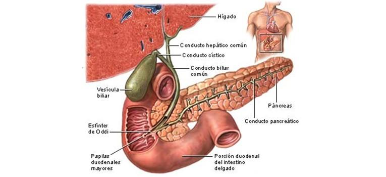 hole in human body